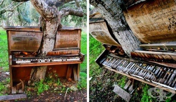 Дърво в пиано, Калифорния, САЩ.