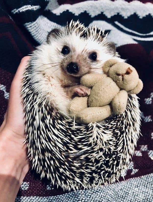 Любимата му играчка.