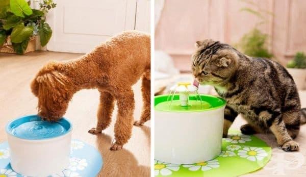 Фонтан за домашния ви любимец, от който лесно ще може да пие вода.