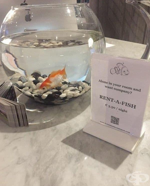 Аквариум с рибка под наем - ако се чувствате самотен и желаете компания.