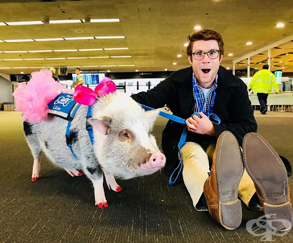 Според Общността за предотвратяване на насилие над животните и международно летище Сан Франциско това е много добър начин за създаване на положително настроение сред пътниците и незабравими емоции.