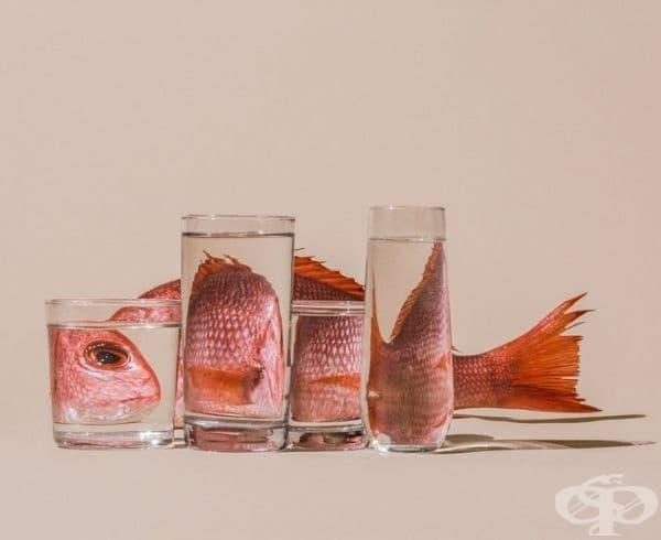 Риба.