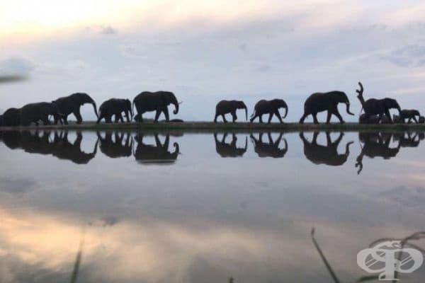 Снимка на слонове в Южна Африка.