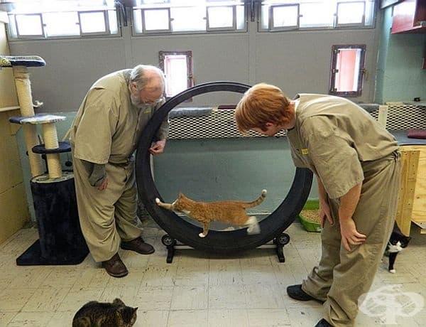 Основната идея е настаняването на котки от приют, които да бъдат обгрижвани и отглеждани от затворници. Целта е да се подобри поведението на провинилите се.