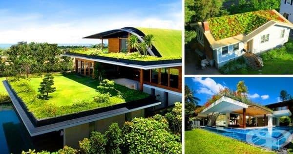 Зелени покриви. Тази идея става все по-известна през последните години – изглежда добре, намалява потока на дъждовна вода, ново местообитание за растения и животни.