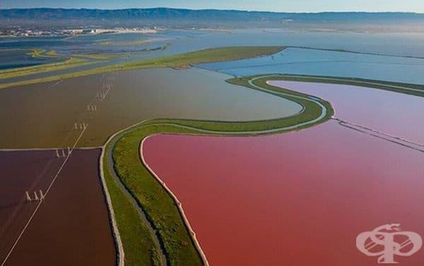 Червени водорасли в солените басейни край Сан Франциско.