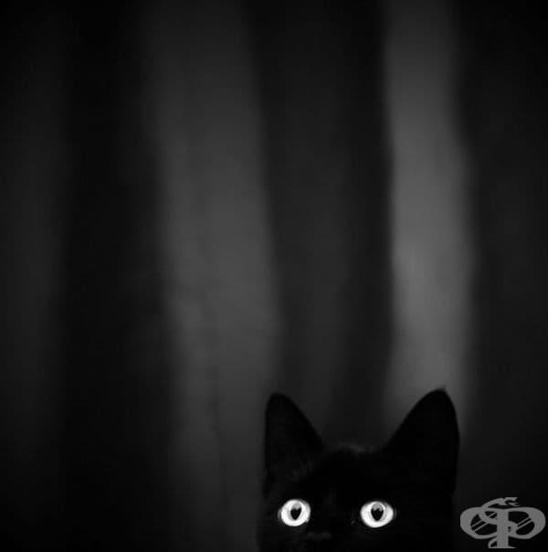 23 котки, които са тъмни като нощта