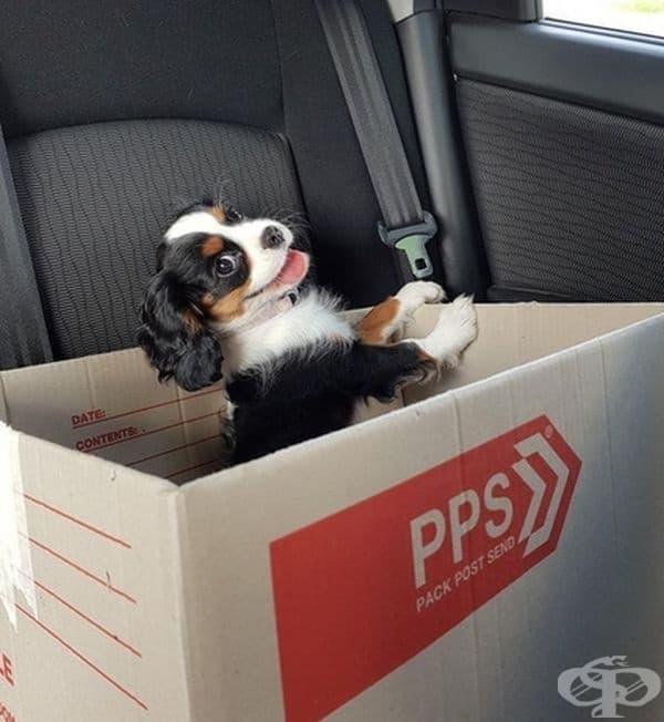 """""""Това е Джейн и обича да пътува в кашон в колата."""