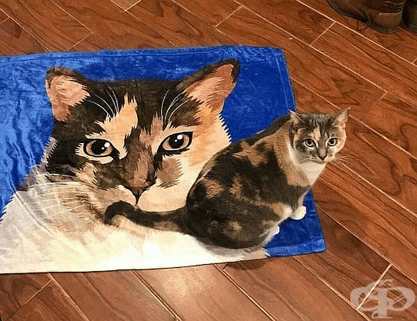 """""""Котката ми също си има двойник."""""""