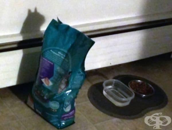 Когато опаковката от храна за котки напомня за котка.