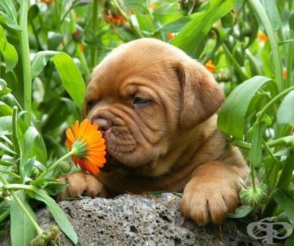 Понякога кучетата спират и миришат различни растения, защото ароматът им напомня за месо.