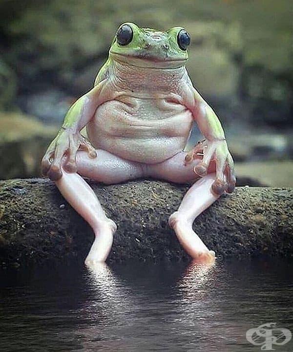 Жабите бутат храната с очите към устата си и затова мигат често по време на хранене.