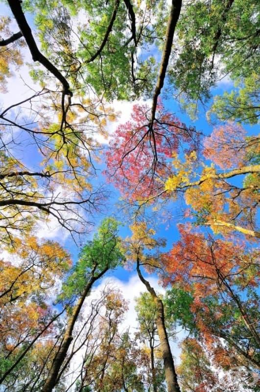 Цветовете на есента.