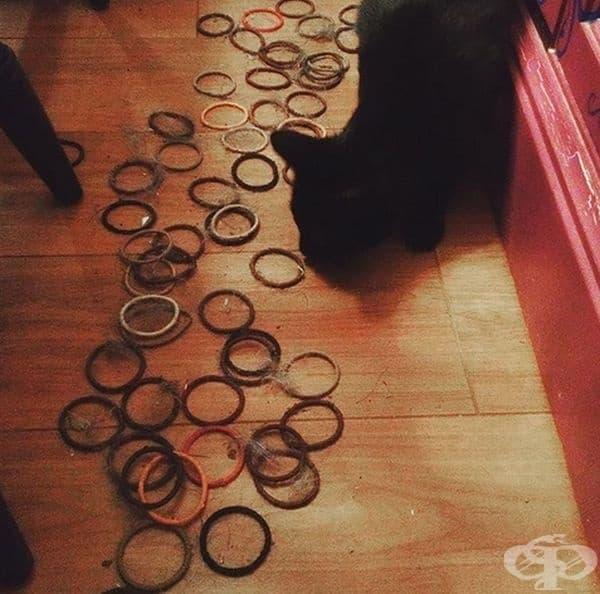 """""""Открих повече от 100 ластици за коса, скрити от моята котка под дивана""""."""