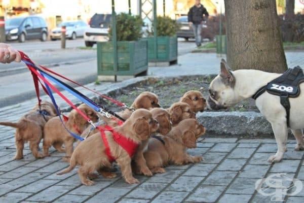 Тяхната първа разходка.