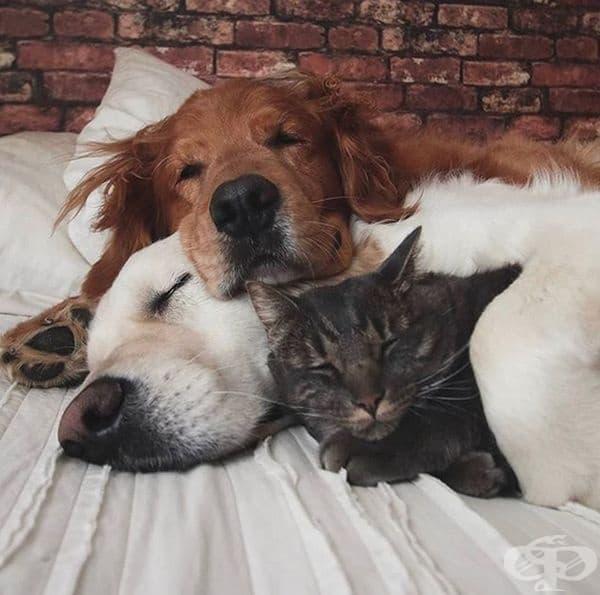 Истински приятели.
