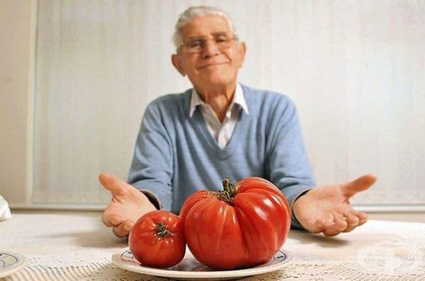 """Антонио Мартоне показва домат от сорта """"Биволско сърце"""" с височина 38 см. и тегло почти половин килограм."""