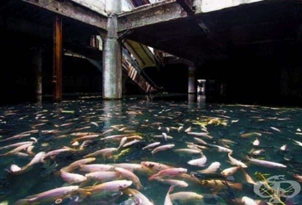 Търговски център в Банкок.