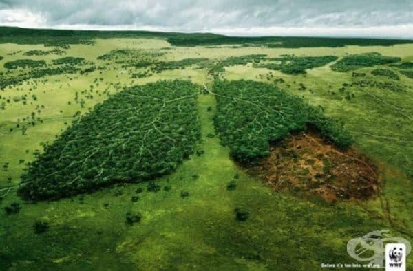 Горите са белите дробове на планетата. (Агенция: TBWA, Париж, Франция).