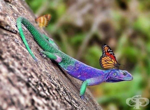 Красота от цветове.