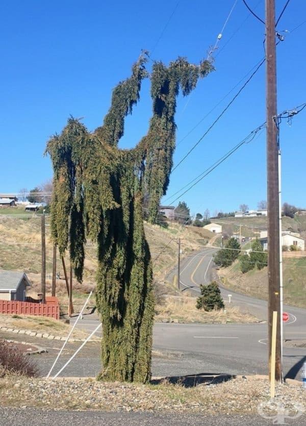 Това дърво изглежда като зъл магьосник.