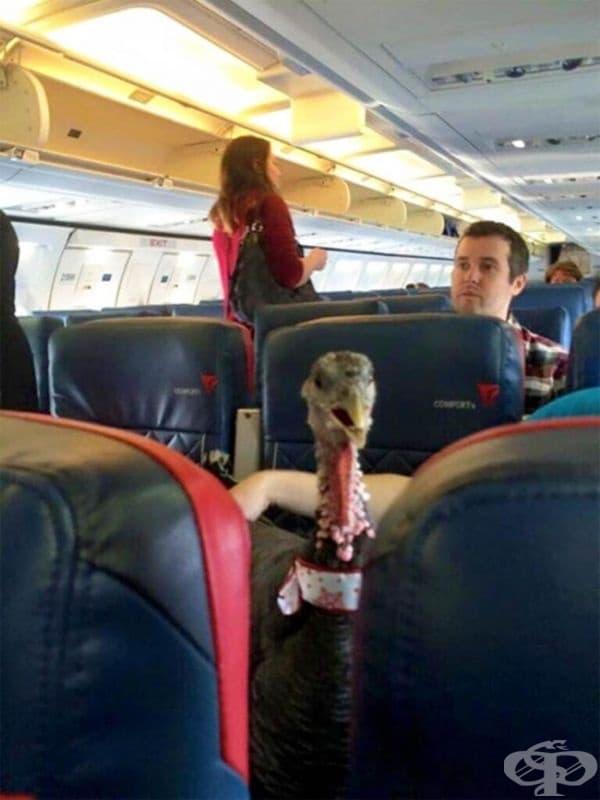 """""""Моята приятелка е стюардеса и ми изпрати снимка на животно, което поддържа емоционалното състояние на един от пътниците."""""""