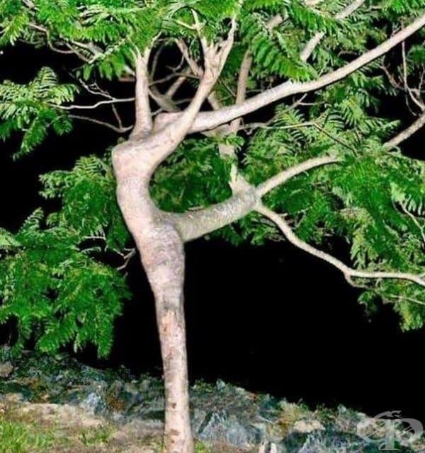 Дървото изглежда като балерина по време на танц.