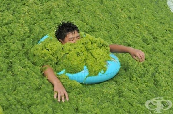 Ужасяващо замърсяване с водорасли в Китай.