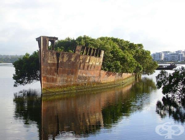 Този стар кораб сега е дом за нова растителност.
