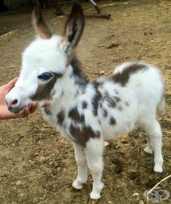 Още едно сладко бебе магаренце.