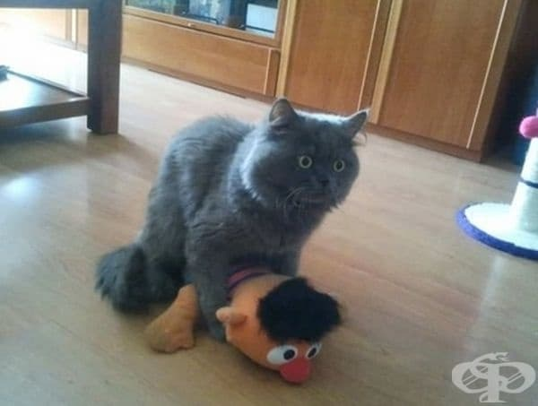 В този миг котката осъзна своята грешка.