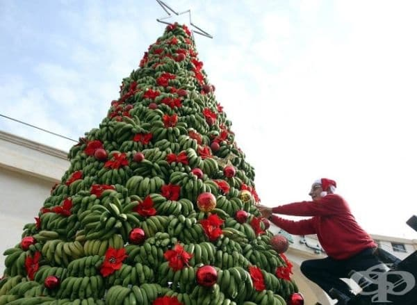 Коледно дърво от банани.