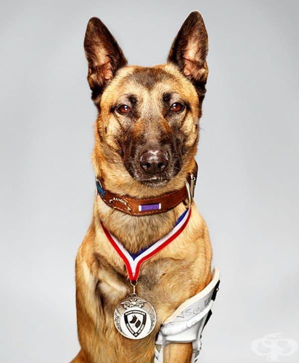 Това куче беше ранено 4 пъти, но все пак успя да спаси хората от сграда в Афганистан. Той оцеля, но загуби едната си лапа.