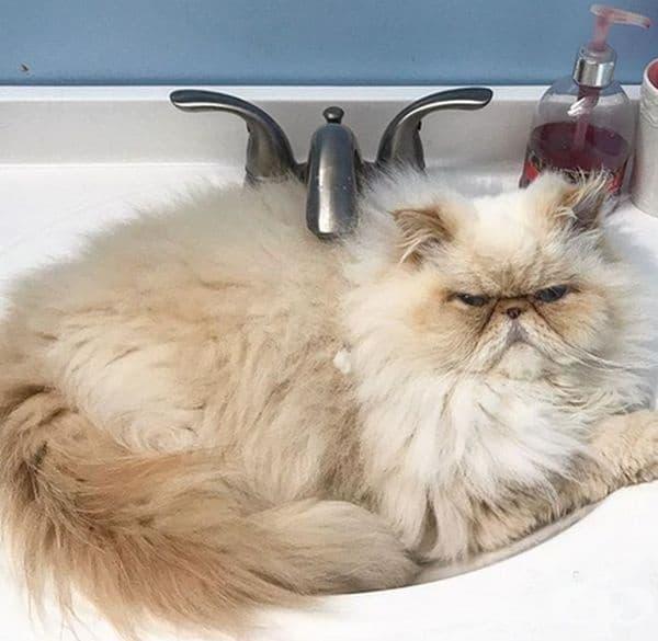 Тази мивка е за предпочитане, ...