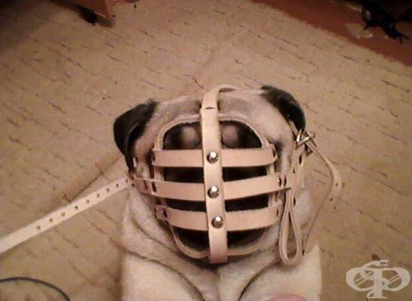 """""""Сега разбирам защо не съм виждал такива кучета с намордници""""."""