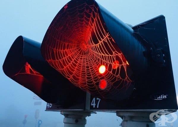 Паяжина на светофар.