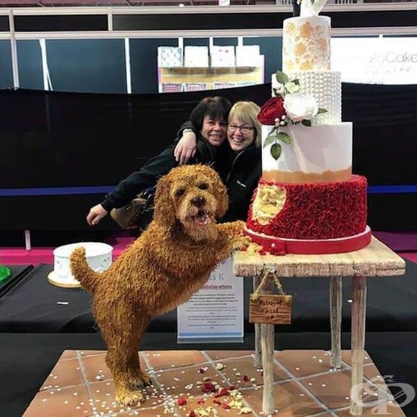 Лошо куче или страхотна торта?