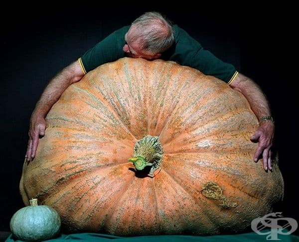 """Джо Мидуей прегръща гигантска тиква от сорт """"Атлантик гигант"""" с тегло 392 кг. по време на Великденския Панаир в Сидни."""