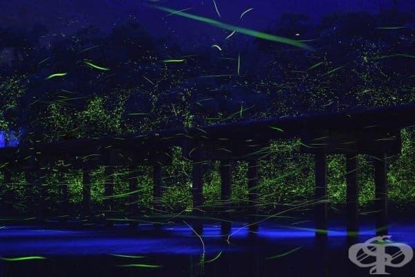 Светулки около малък мост над река Шинано, Япония.