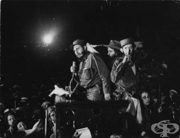 Гълъб каца на рамото на Фидел Кастро, докато той изнася реч, 8 януари 1959.