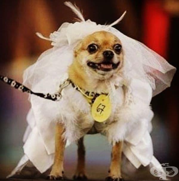 """""""Това ли е младоженецът?"""""""