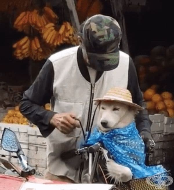 Този човек няма чадър, нито дъждобран, но се опитва по най-добрият начин да защити кучето си от дъжда.