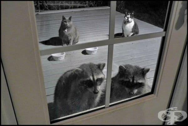 """""""Я пак?! Колко котки имаме?"""""""