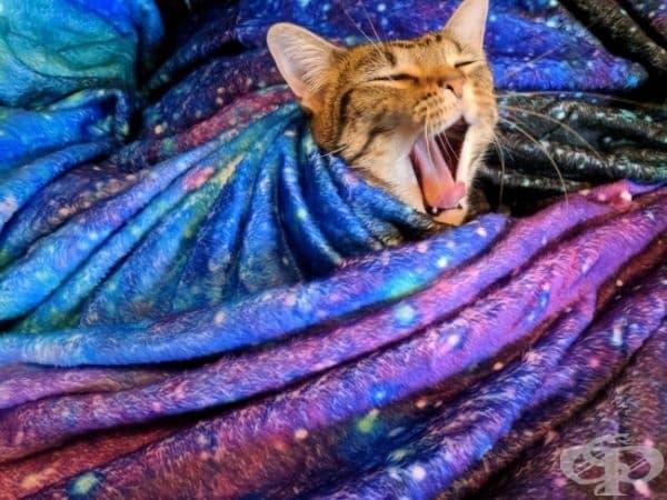 В действителност, котката е центърът на вселената.