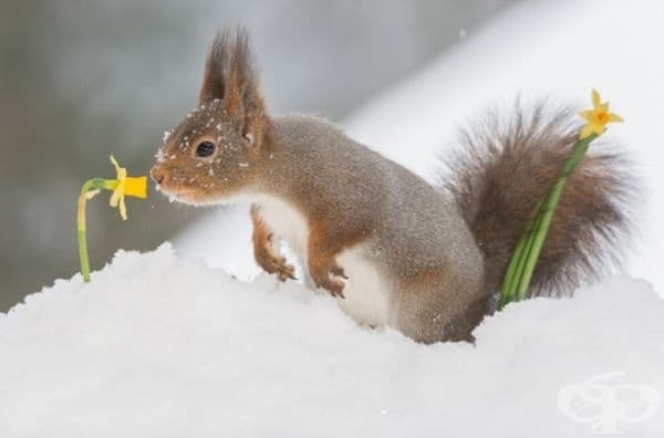 Зимата е прекрасно, но е вече идва пролетта.