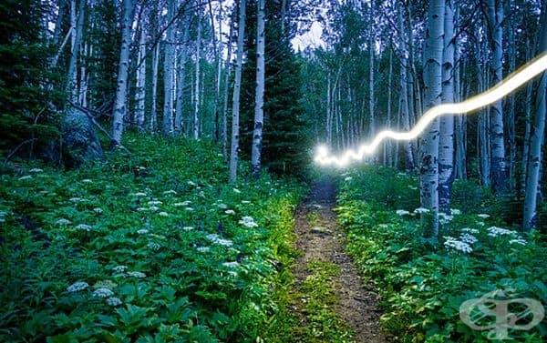 Светкавица в гората.