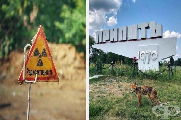 20 снимки от Чернобил, които показват как природата възстановява заразената земя - изображение