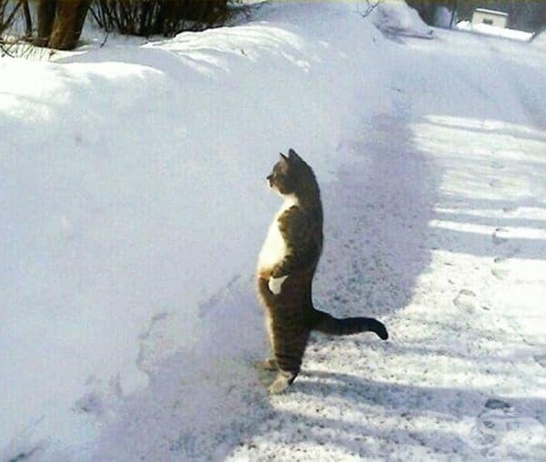 """""""Това съм аз, виждайки някой непознат пред вратата."""""""