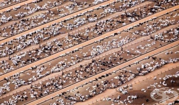 Промишлено животновъдство в Бразилия.