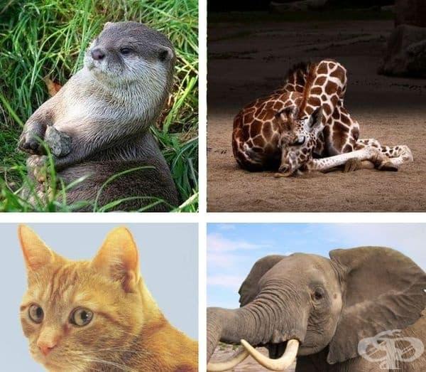 Видрите имат торбичка на телата си. Там държат любимото си камъче. Жирафите спят средно около 4:30 часа на нощ. Котките имат 32 мускула във всяко ухо. Слоновете са едно от 3-те животни, преминаващи през менопауза, заедно с хората и гърбатите китове.